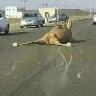 #نادي_الابل فاول ياحكم 😂 https://t.co/MHTZB7qXrt