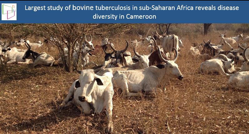 m bovis genetic diversity A web application for m bovis, including spoligotyping and miru-  genetic  variability among the four main spoligotype sb0120, sb0121.