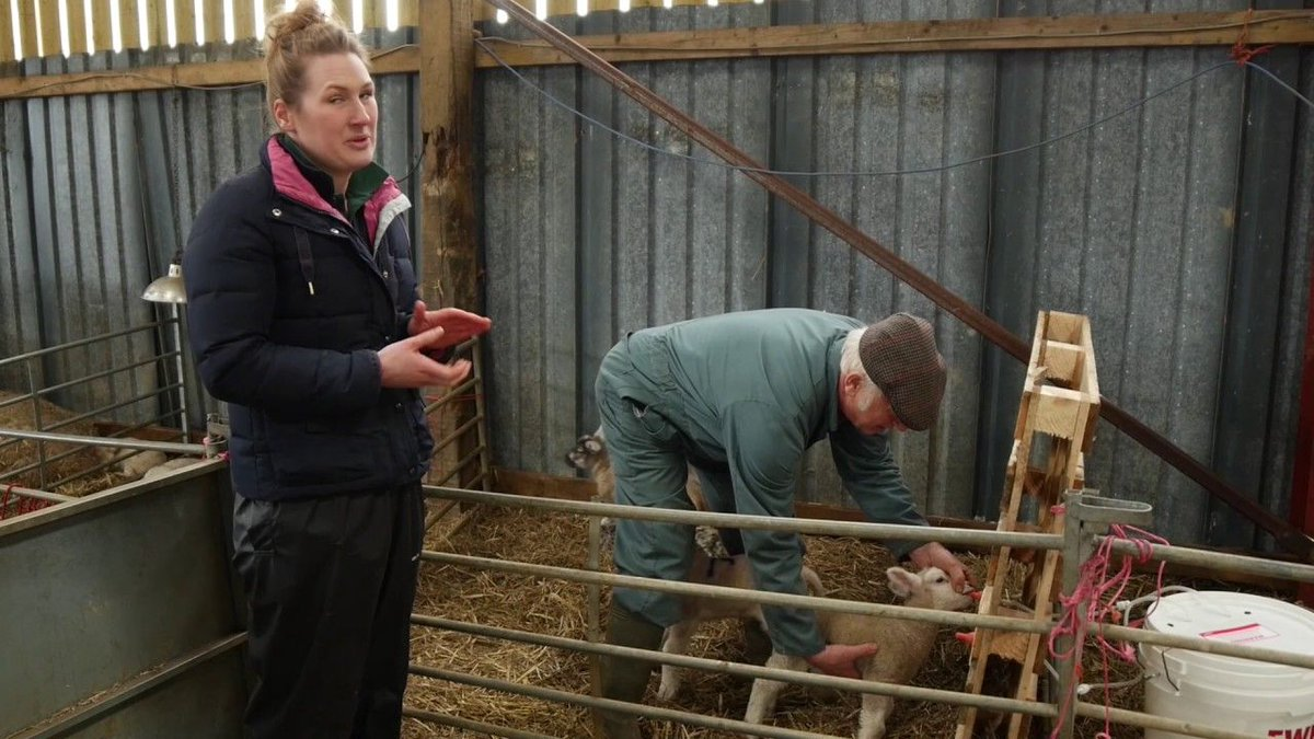 How to train newborn lambs to feed using an ad lib feeder. Watch now:  Sheep Farmers #lambing17  http:// buff.ly/2upUDSq  &nbsp;  <br>http://pic.twitter.com/ol25sbzTBd