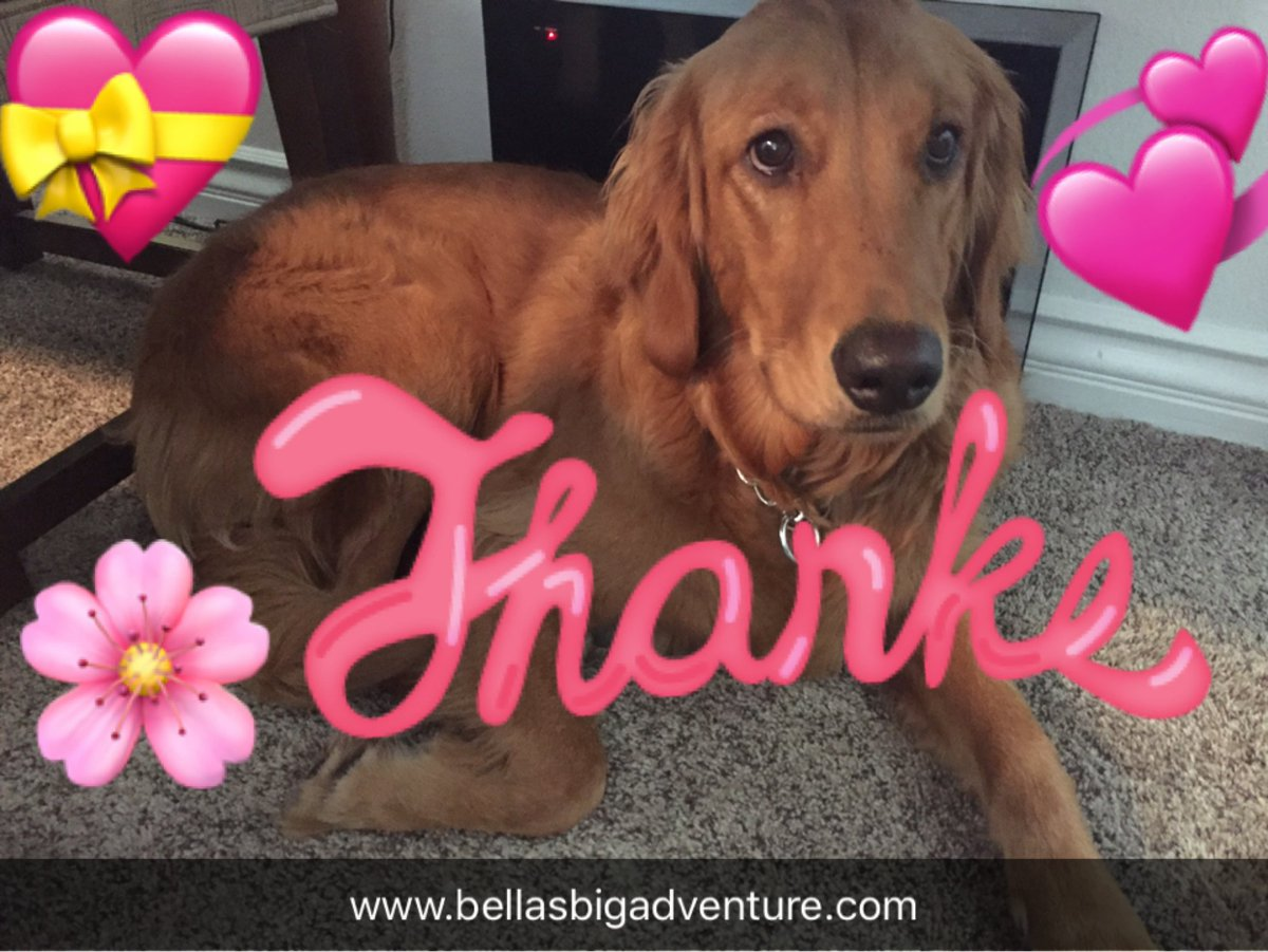 Thank you for following our #adventure&#39;s!  We want to bring you new movies.  Please help with your donation @   https://www. gofundme.com/bellasbigadven ture &nbsp; …   #dog<br>http://pic.twitter.com/4LpmsIG86J