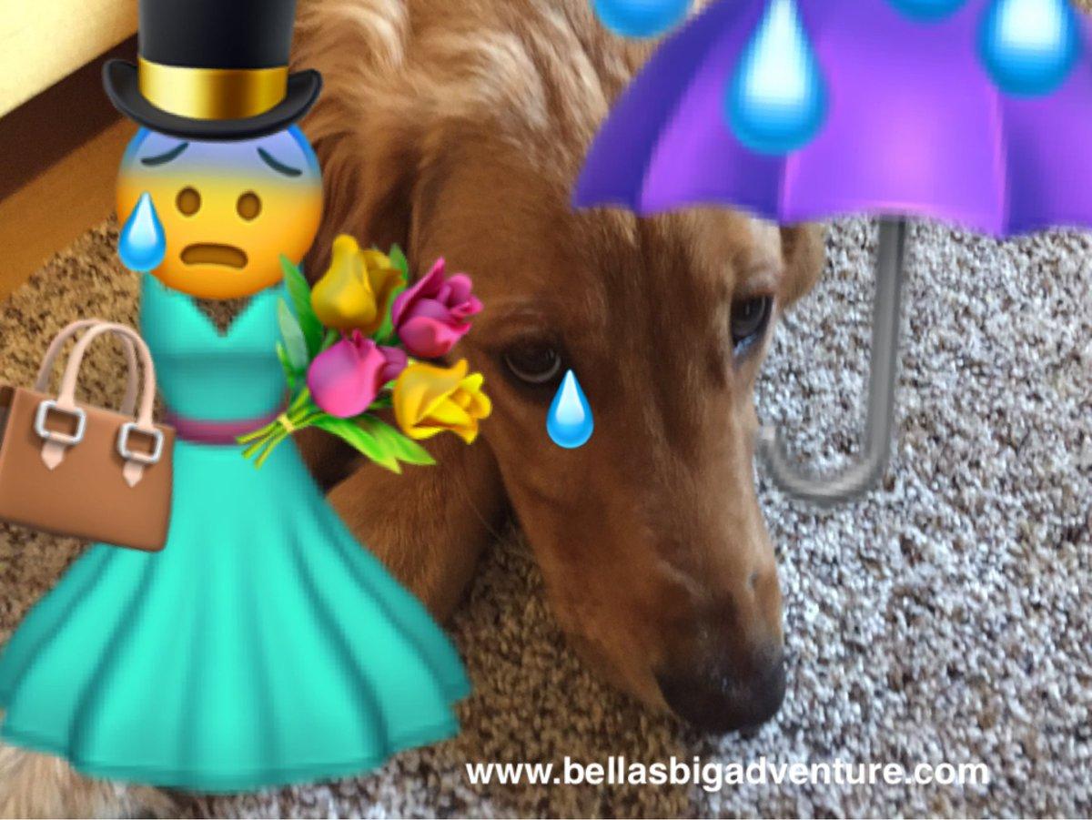 We need you help!  Please support us @  https://www. gofundme.com/bellasbigadven ture &nbsp; …   #dog #dogs #golden_retriever #animals #travel #America #adventure #animals<br>http://pic.twitter.com/WPLTGOcm1y