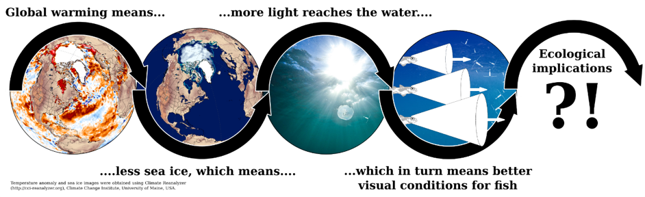 New article on our blog! &quot;Sea-ice loss boosts visual search efficiency&quot; by @TomJasperL   http:// tinyurl.com/y9zce5fm  &nbsp;   #scicomm #marinebiology <br>http://pic.twitter.com/55PvCBZstP