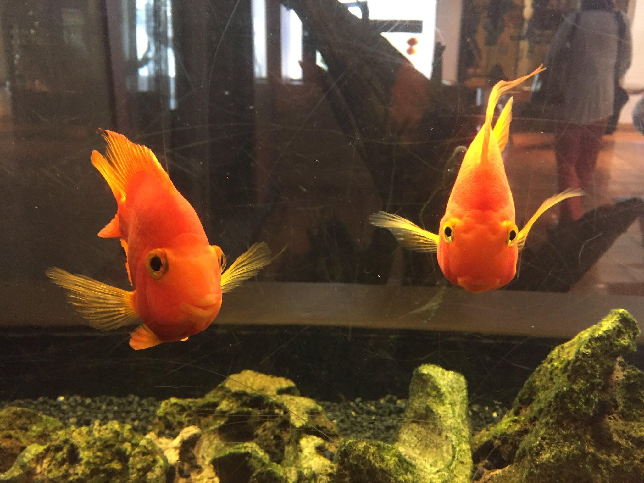 Fish at the @WashPlazaHotel #KSDC17 https://t.co/CyFvNrjzyT
