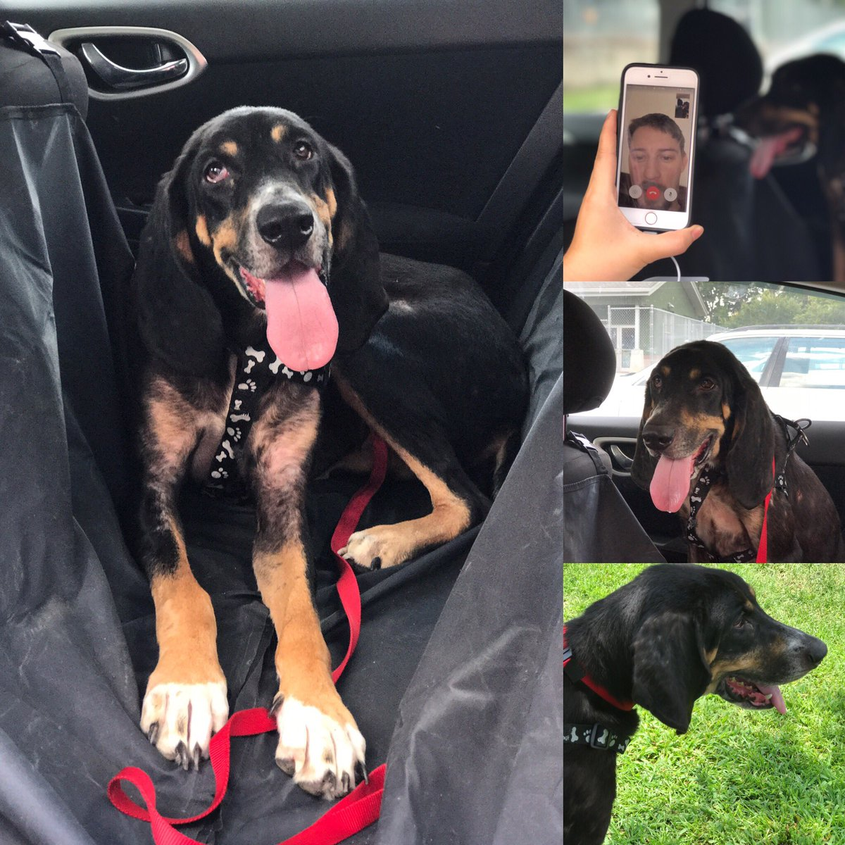 Shelby, a PTSD dog was lost 3 months ago in Linden Tenn. &amp; found in #chas thanks to a microchip she will be reunited with her dad tonight! <br>http://pic.twitter.com/IllqNyYRWs