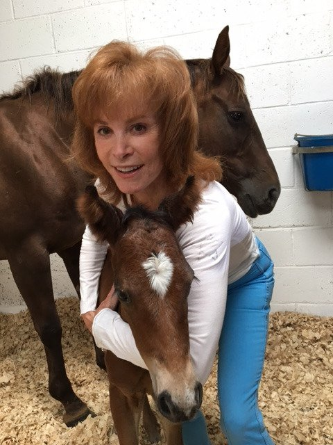 RT @Stefanie_Powers: My new baby Pancho with mama Santi in the back - born July 18, 2017. https://t.co/UkAYBW35Dm