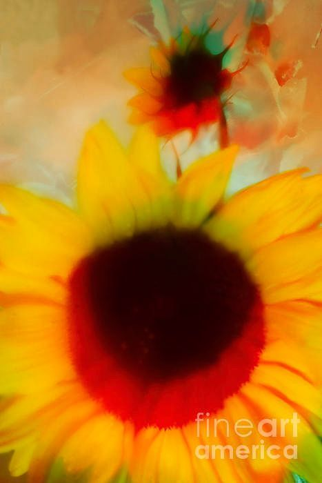 #retweetplease #abstract #print A Couple Of #Sunflowers # 3. by #AlexanderVinogradov  http:// buff.ly/2ue7UL7  &nbsp;  <br>http://pic.twitter.com/OXjqMvzY1g