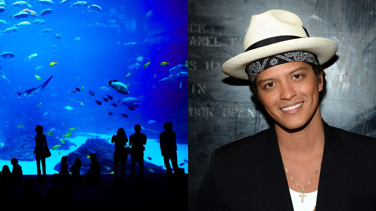 Can You Help Corroborate This Story That I Went To The Aquarium With Bruno Mars So My Daughter Will Respect Me? clckhl.co/LkTqE3y