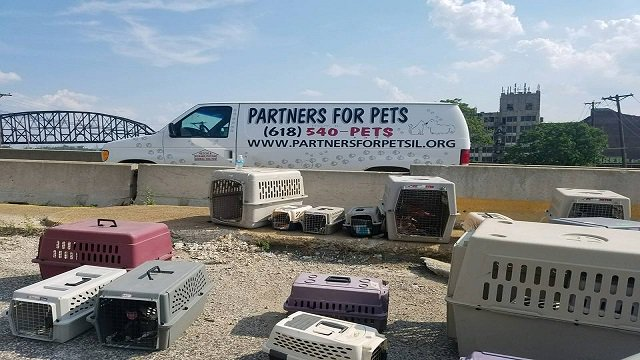 Good Samaritans help transport 30 animals after IL shelter van breaks down https://t.co/B9kHqcwQSN