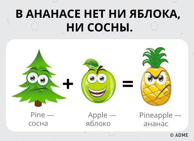 ананасы картинки на английском вот скоро