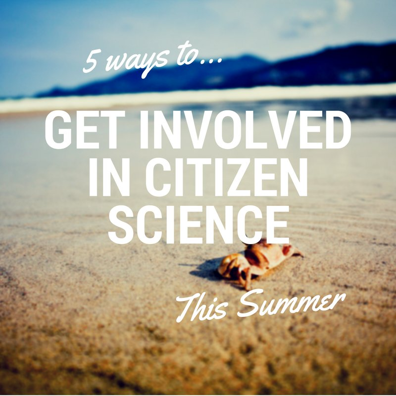 New Blog: How to get involved in citizen science this summer!  http:// bit.ly/2vqNpuN  &nbsp;   @NHM_London @mcsuk #MarineBiology #citizenscience<br>http://pic.twitter.com/CiJL9B8c4S