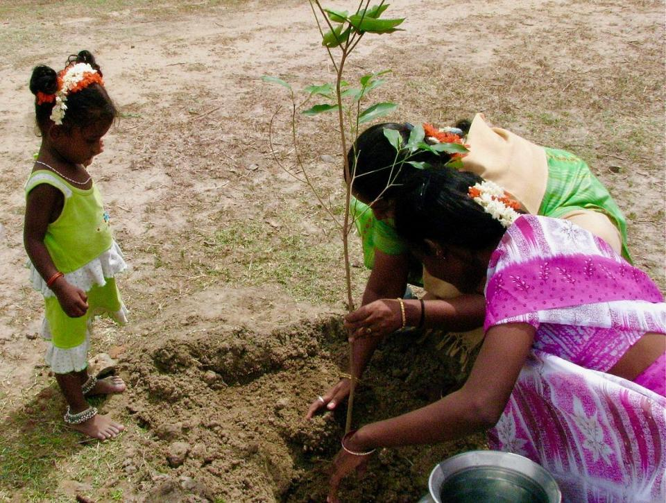 save and plant a tree india Thinking of planting a tree please stop deepika sarma grist media 20 june 2014 reblog  which is widely planted in india, strips the soil of moisture and nutrients and renders the soil in the area infertile they can also be eye-poppingly expensive, costing huge amounts of public money  george says that gadkari's move to plant.