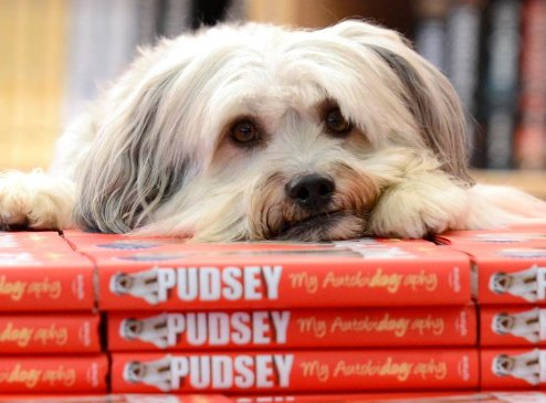 Britain's Got Talent dog Pudsey, dead at 11. https://t.co/FBFWMXCD2M