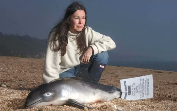 Dead #dolphins are washing up on Cornish beaches. Disease, scarcity of food, commercial fishing seen as culprits.  http:// bit.ly/2ueyB3M  &nbsp;   <br>http://pic.twitter.com/t5Mm2Tr6CB