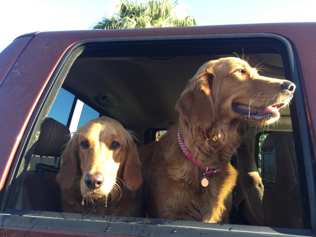 We need you, Bella&#39;s friends and fans, to help us to meet our goal for Lil&#39; Bella and Lola&#39;s #adventure!   https://www. gofundme.com/bellasbigadven ture &nbsp; …   #dog #USA <br>http://pic.twitter.com/kleCDu0Zw2