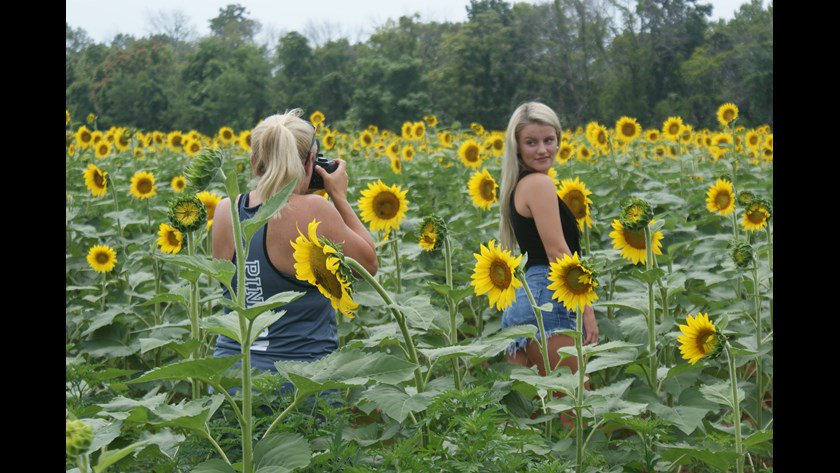 SLIDESHOW: Check out the AWESOME sunflowers blooming in Montgomery County. #sunflowers #Potomac @wusa9 @MarylandDNR  http://www. wusa9.com/news/local/mar yland/photos-of-sunflower-field-in-montgomery-co/458642334 &nbsp; … <br>http://pic.twitter.com/PWXMnWrJCW