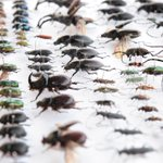 Overall insect population numbers have shrunk by 40 per cent over the last four decades https://t.co/FlQ6I9E0WX