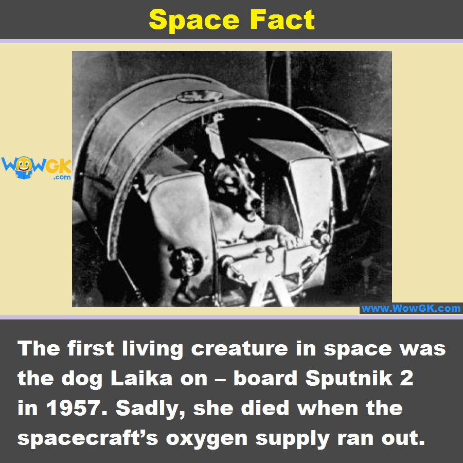 Can you name the first living creature to be sent to space? #SpaceFact #Like | #ReTweet | #Reply <br>http://pic.twitter.com/LW3YTMZTuj