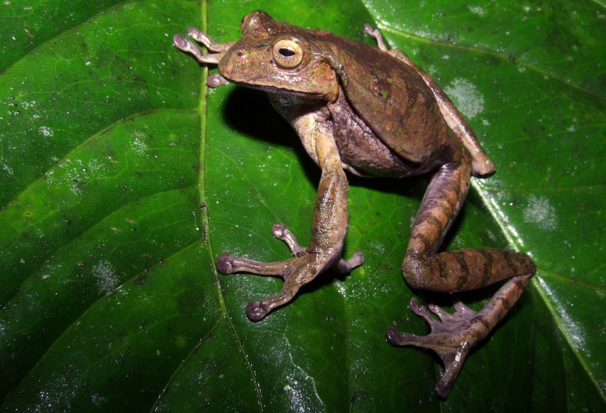 Where has #Gastrotheca testudinea #marsupial #frog been recorded in #Ecuador? Check our new article @cklistjournal:  https:// doi.org/10.15560/13.4. 121 &nbsp; … <br>http://pic.twitter.com/WRR9xQ8toh