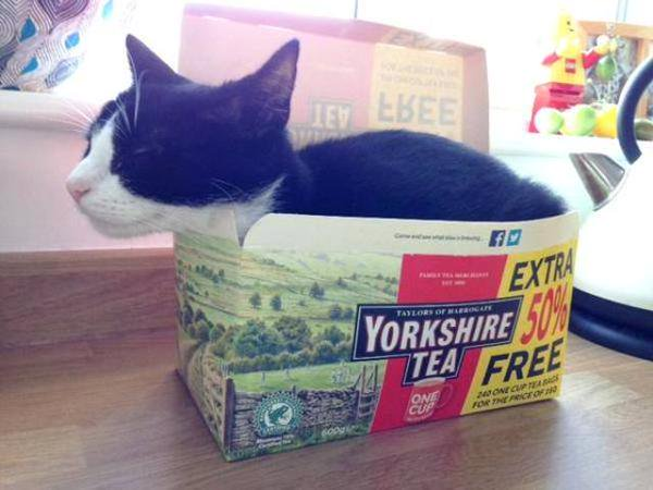 #Caturday Milo knows where he comes from! #Yorkshire