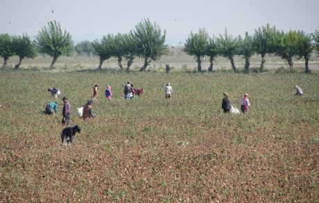 World Bank's benighted view of human rights has it funding and prolonging Uzbekistan's forced labor to pick cotton. https://t.co/lARZ8LTKrf