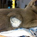 猫が綿棒を取り込もうとしている?!可愛すぎるその姿に釘付け