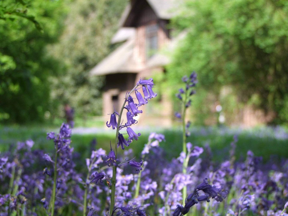 &#39;Bluebells&#39; Flowers  http:// eyesshare.co.uk/ProjectRetail/ Default/Translator.php?page=Main.html&amp;subpage=/WebRetail/Pages/Shop/CreatorProducts.html&amp;creator=3&amp;product=106&amp;app=eyes &nbsp; …  #shutter #jpg<br>http://pic.twitter.com/ekTAlAuTLn