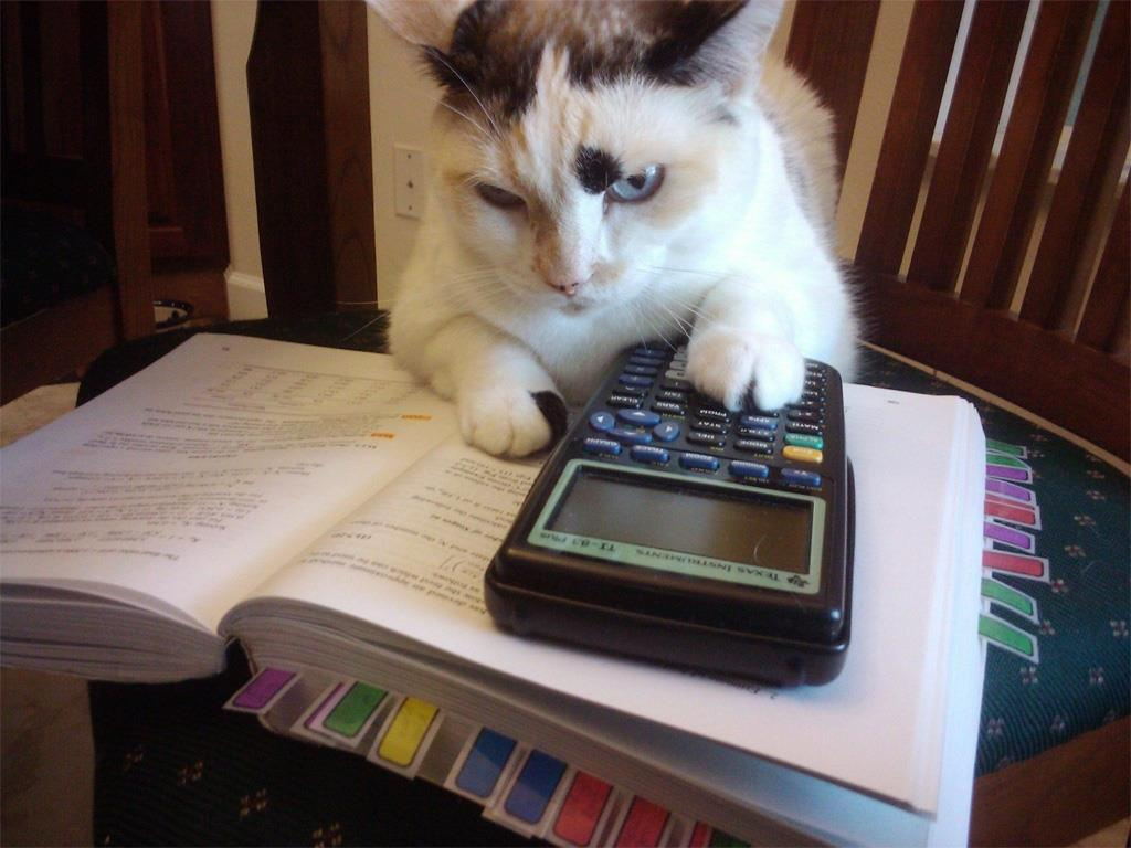 &quot;Hmmmm, just as I suspected... you cant afford to keep the dog.&quot;  #Caturday <br>http://pic.twitter.com/1kVIsLc5pc