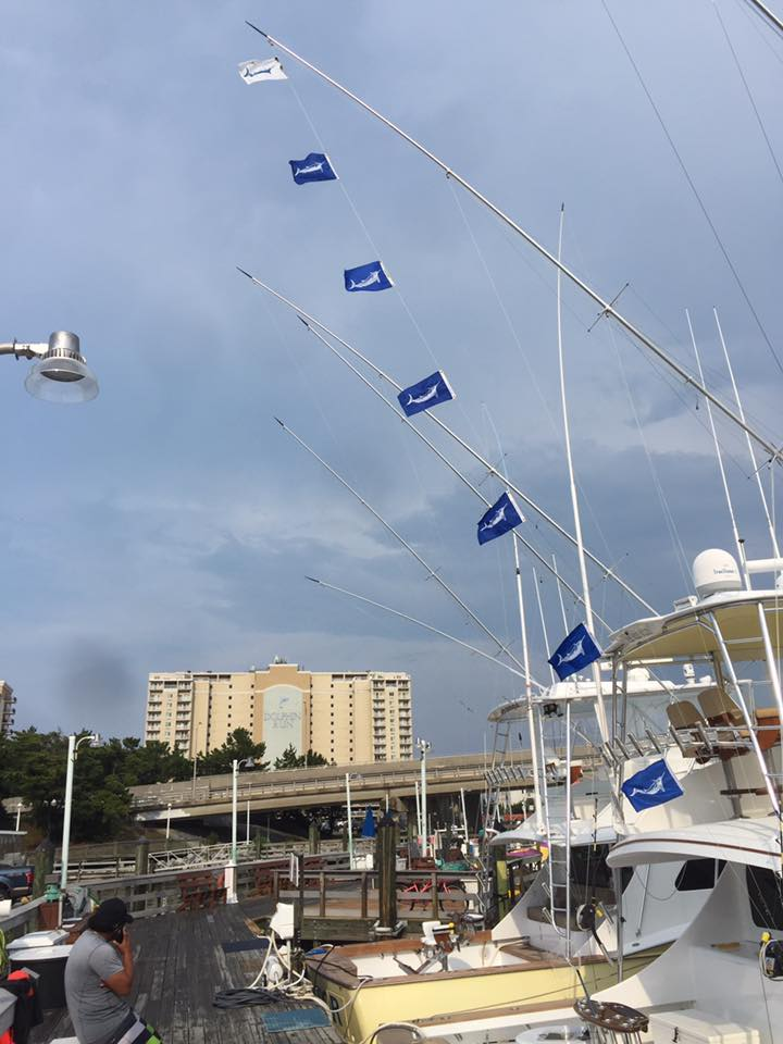 Virginia Beach, VA - Rebel released a Blue Marlin and 6 White Marlin.