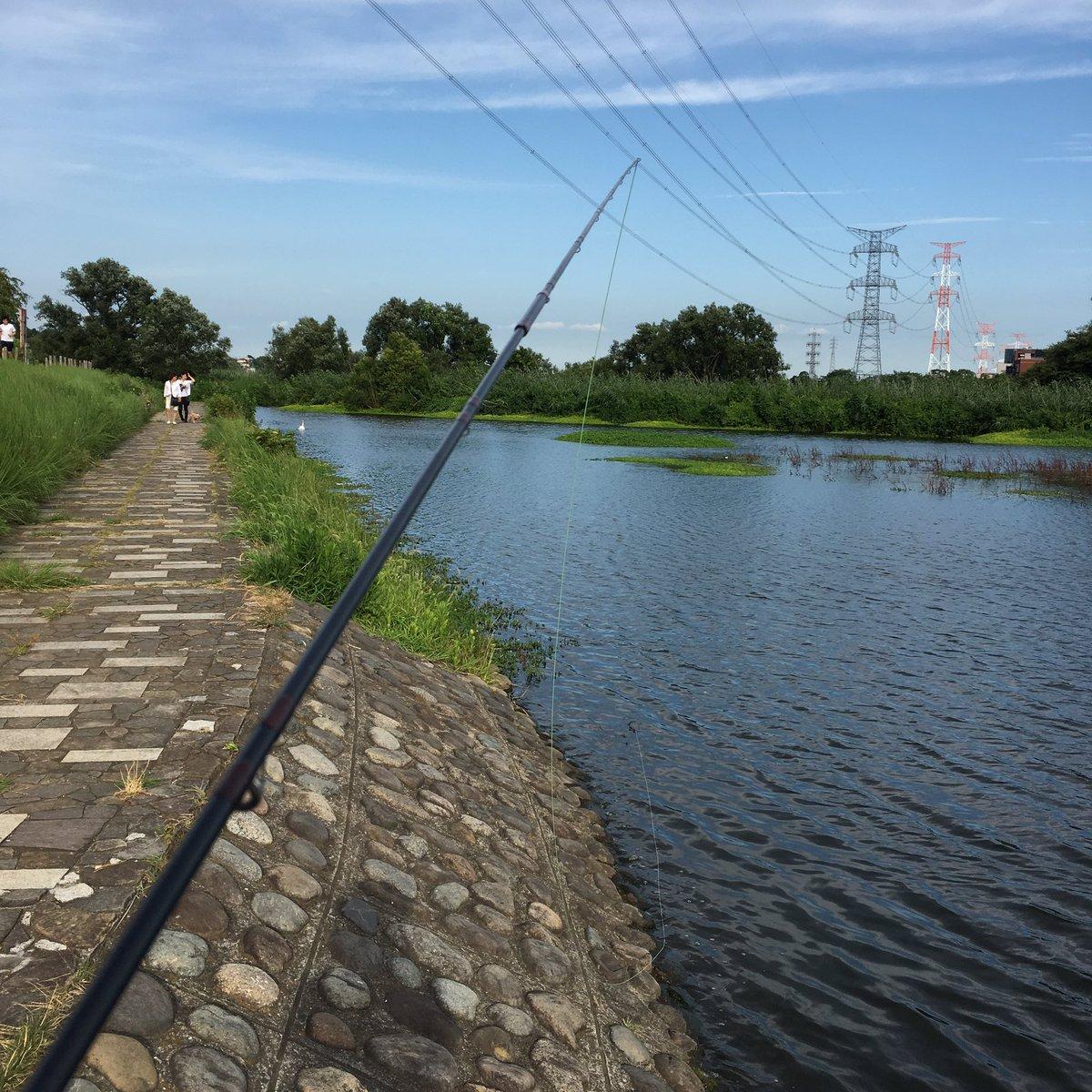 """釣雨 on Twitter: """"北柏ふるさと公園で、鯉釣りです。岸のナガエツル ..."""