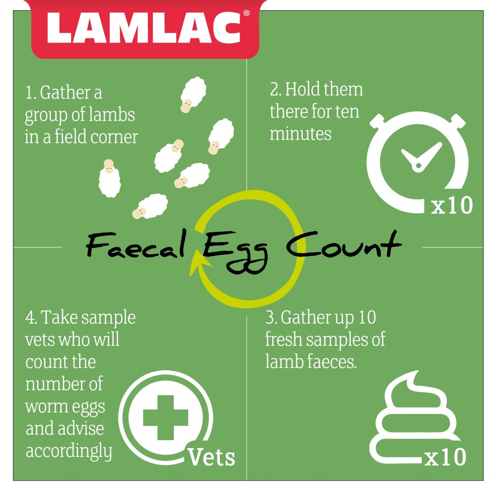 A Faecal Egg Count is a quick and easy way of determining whether your parasitic treatments are working. #lambing17 <br>http://pic.twitter.com/0yR1niTg7v