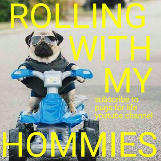 Have a great day friends #pugs #dogs #retweet #pug #follow #like #puglife #dog #funny #cute #aww #pugchat #fun #Pugs #lol #pets #folloback <br>http://pic.twitter.com/4WLRzVZ1XT