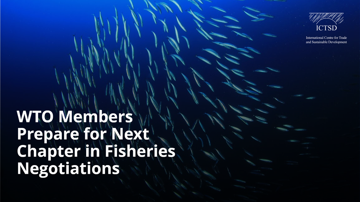 The push for a fish subsidies deal at the #WTO has taken on renewed energy in light of #SDG14:  http:// bit.ly/2vF5kNw  &nbsp;  <br>http://pic.twitter.com/W7vn5dlyl1