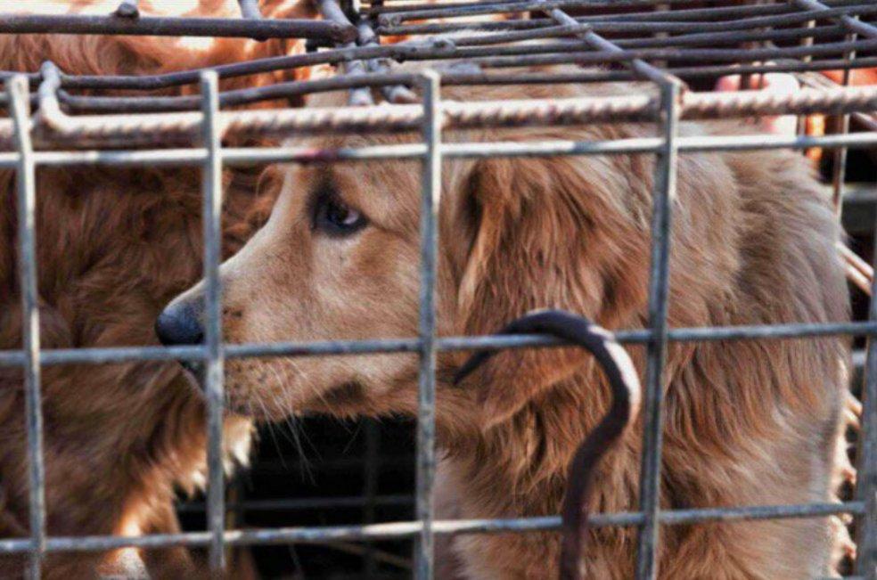 #OzAsia @OzAsiaFestival @AnimalsAus Please raise awareness for Companion Animals suffering throughout #Asia #DogMeatTrade #StopAnimalAbuse<br>http://pic.twitter.com/sz9gK8ersb