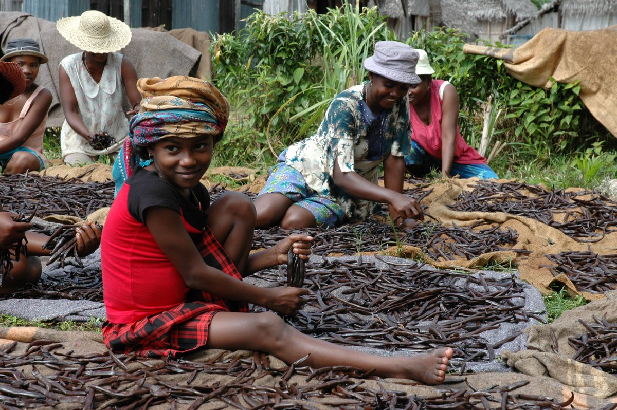 Love #Vanilla ice cream? Real vanilla is very labor intensive and produced by #ChildLabor in #Madagascar &amp; #Uganda via @USDOL<br>http://pic.twitter.com/CjE468SLzF