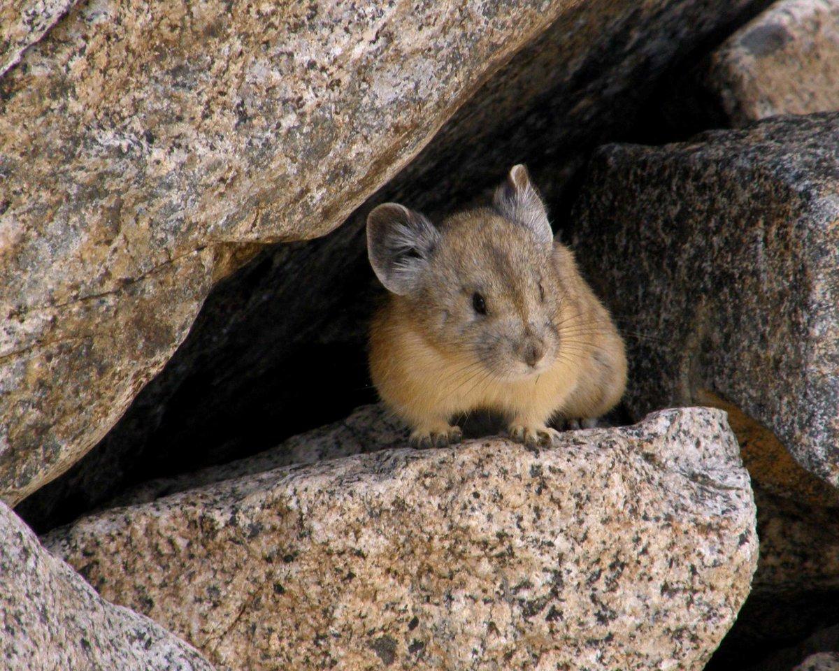 mimi the rabbit mimitherabbit twitter