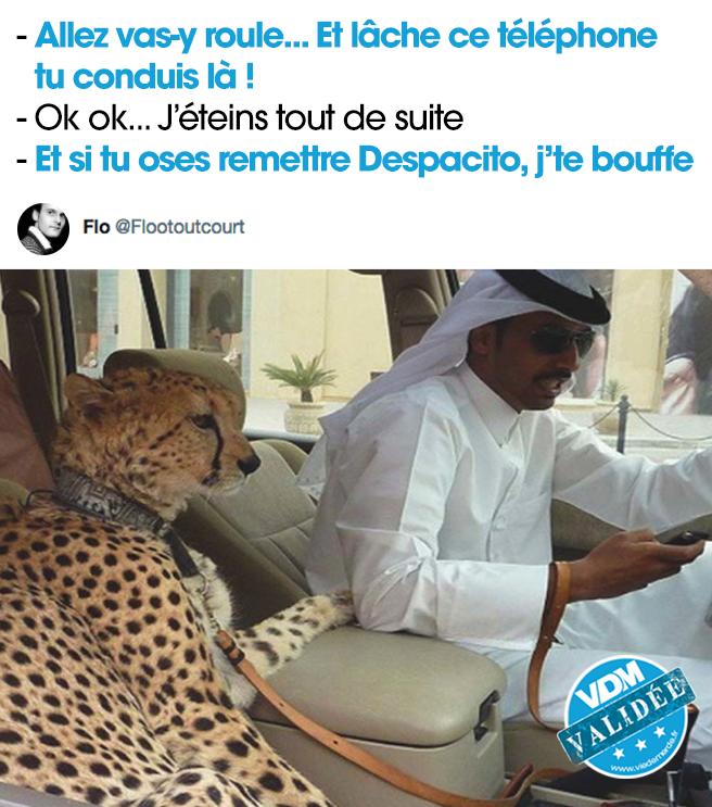 'Tu m'touches, j'te bouffe' #VDM #viedemerde #leopard #jtebouffe #despacito https://t.co/tqnsJvX3wl