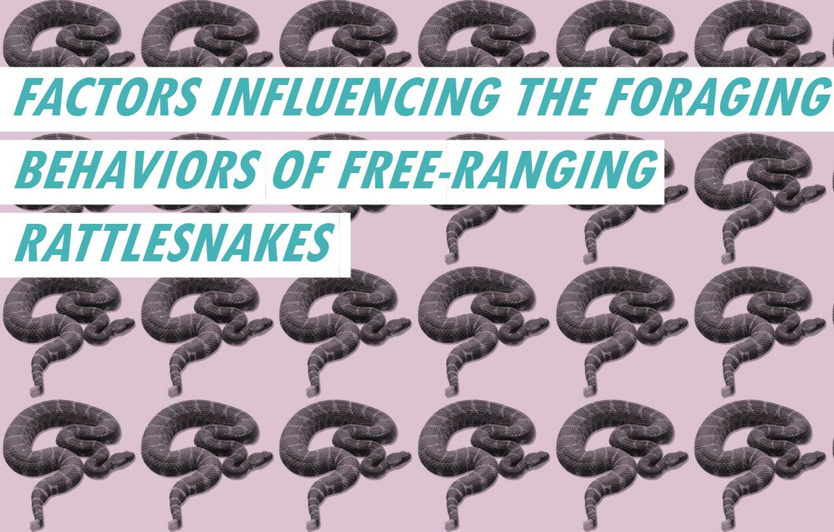Who&#39;s excited for Biology of #Snakes Meeting next week?! I&#39;ll be speaking on #rattlesnake foraging behavior. #SciComm #BiologyofSnakes<br>http://pic.twitter.com/qOHVC0nHsr