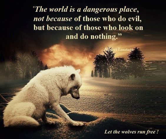 My heart is down Speak up, you know the pain #Washington #Wolves  #EndangeredSpecies  #SmackoutPack  #Washington  #keepwolveslisted #Wolfie<br>http://pic.twitter.com/lRYVDKBwJD