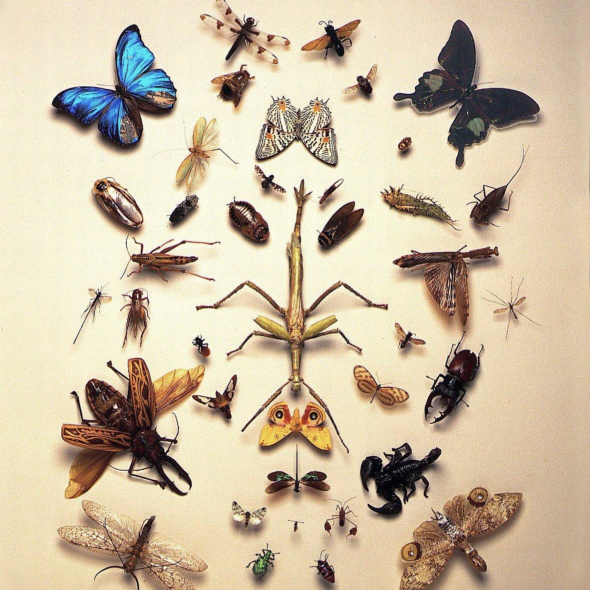 изобретатели энтомология в картинках пережил один захват