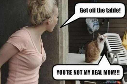Kiren my niece, speaks her mind.  #CatsOfTwitter #Cats #Meow #JustSaying <br>http://pic.twitter.com/MXiDf6lDw7
