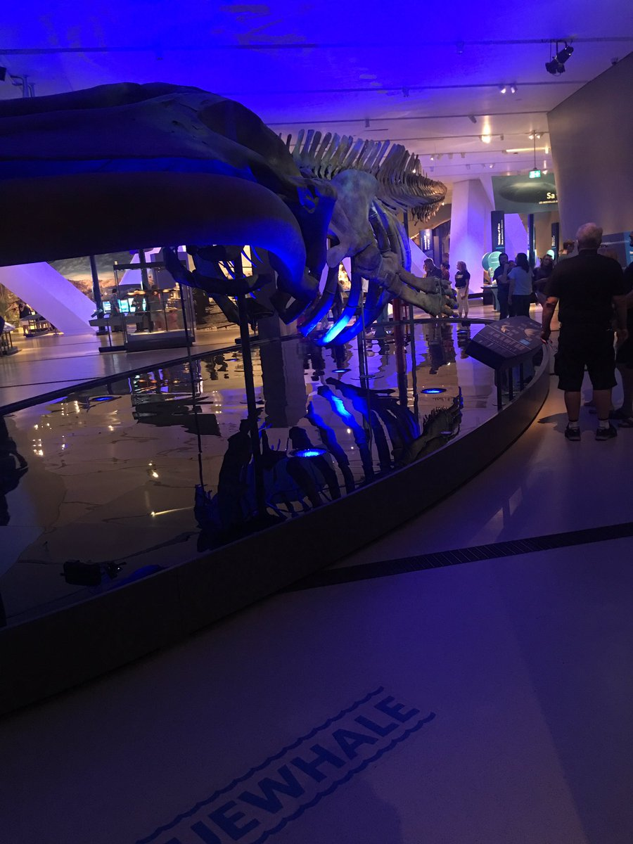 #ROMBlueWhale one of the best complete exhibitions I&#39;ve been to. Highly recommended if you&#39;re in #Toronto @ROMtoronto #thankyou<br>http://pic.twitter.com/V5fZsP7HEH