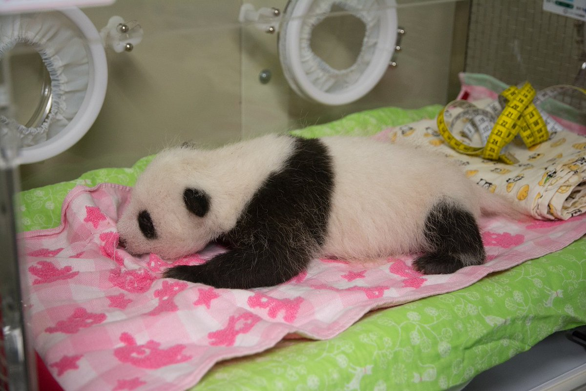 都立動物園公式サイトTokyoZooNetでは動画もご覧いただけます。tokyo-zoo.net/topic/topics_d… pic.twitter.com/tgEbzjgpO1