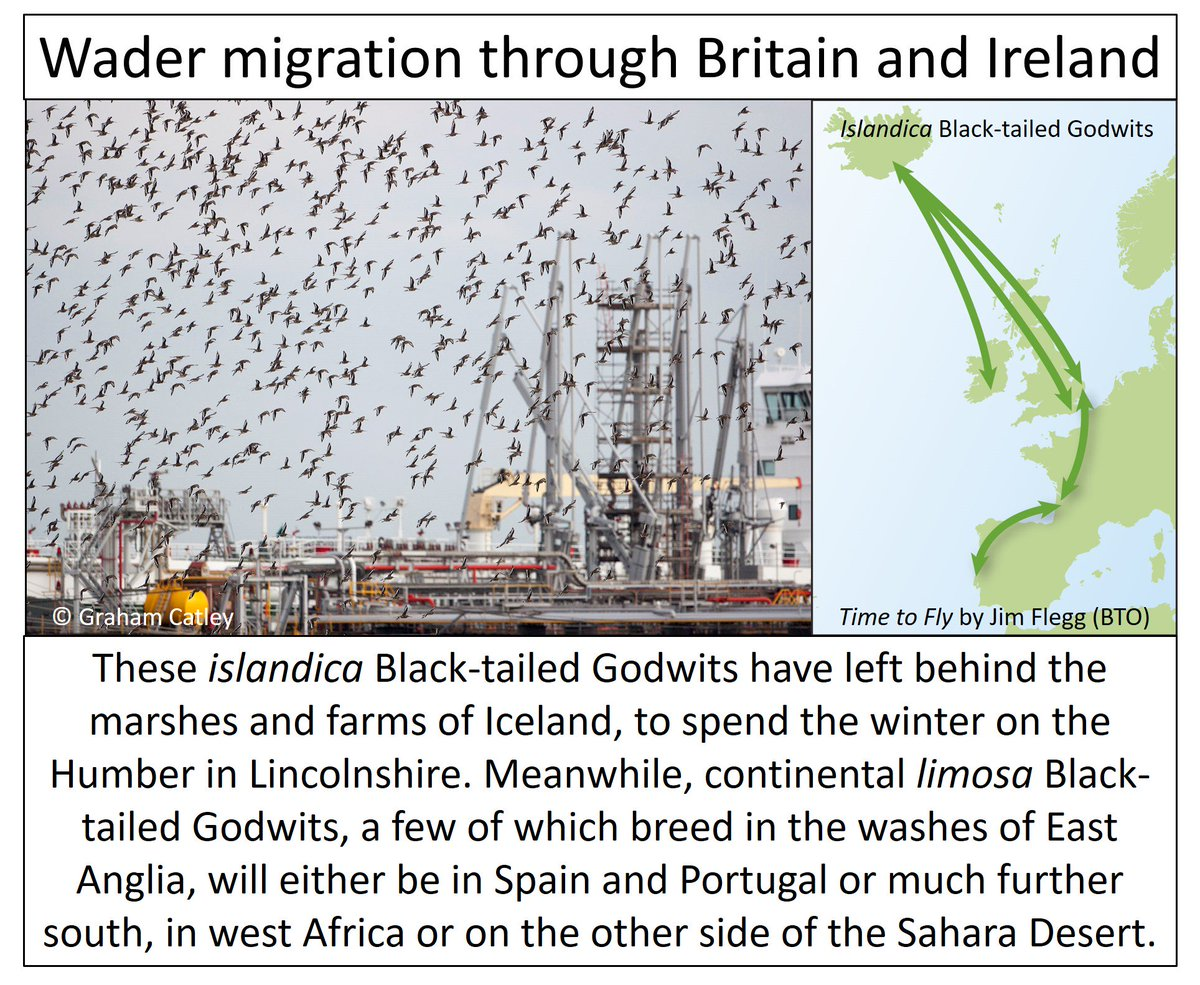 From stints to stilts 40+ wader species on migration The autumn wader rush through Britain and Ireland  https:// wadertales.wordpress.com/2017/07/20/whi ch-wader-when-and-why/ &nbsp; …  #ornithology <br>http://pic.twitter.com/iw6L5wEudS