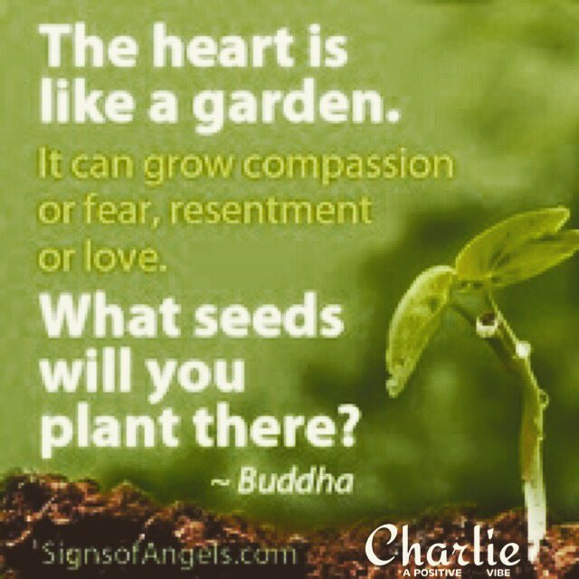 The HEART is like a Garden... what seeds will you plant there? ~Buddha #compassion #heart #Happiness #positive #ThinkBIGSundaywithMarsha<br>http://pic.twitter.com/NYPUQXeSWg
