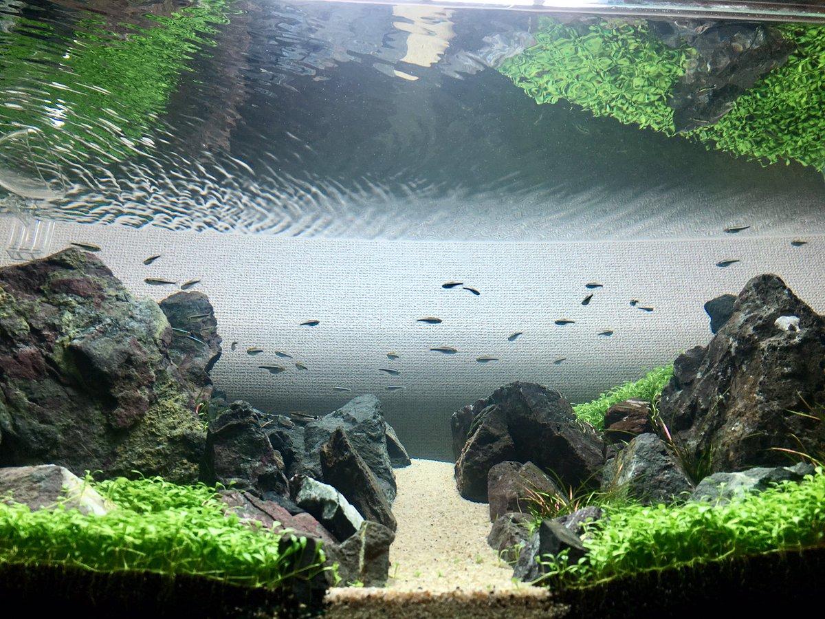 Yuya O 綺麗な写真を撮るにはどうすればいいんだろう まず後ろの壁紙がダメだな アクアリウム Aquarium ブラックネオン 水景