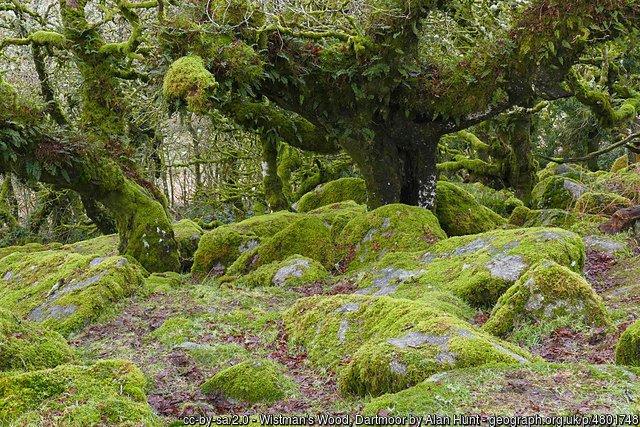 Wistman&#39;s #Wood, #Dartmoor by Alan Hunt #Devon  http://www. geograph.org.uk/photo/4801748  &nbsp;  <br>http://pic.twitter.com/dQJN87IhiX
