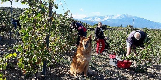 Oenotourisme dans les P.-O. : à la découverte d'une ecolodge chic à la coopérative (abonnés) #tourisme #vins https://t.co/krD7dYe6Mp