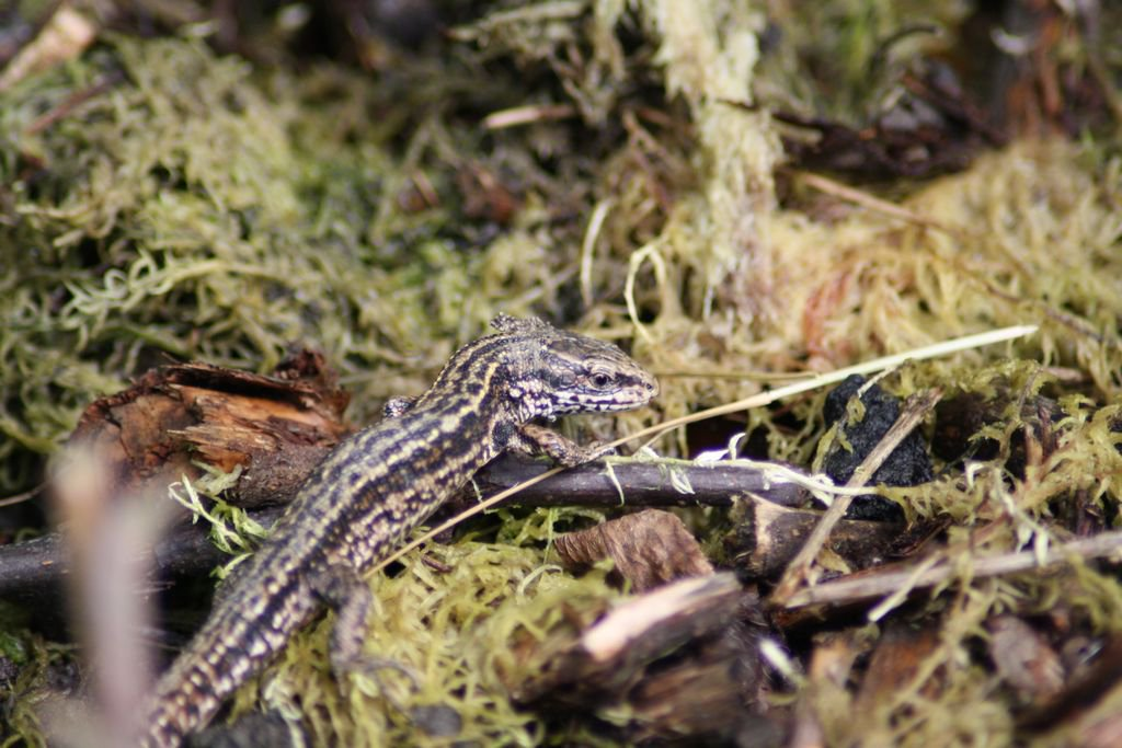 Searching for the perfect way to spend the #summer? join us @reptileproject and help us find elusive #reptiles around #County #Durham.<br>http://pic.twitter.com/gt0AGLpP6l