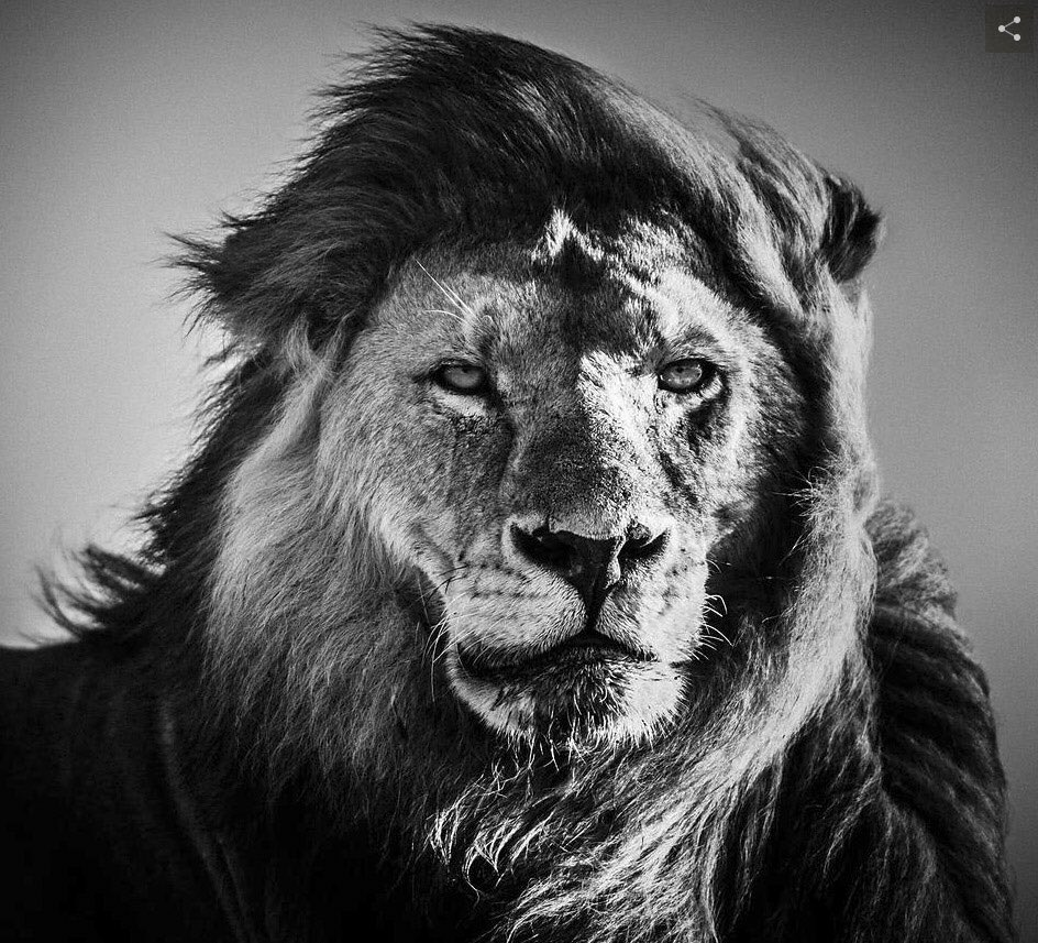 Crédit @laurentbaheux  https://t.co/omdcyK8wio