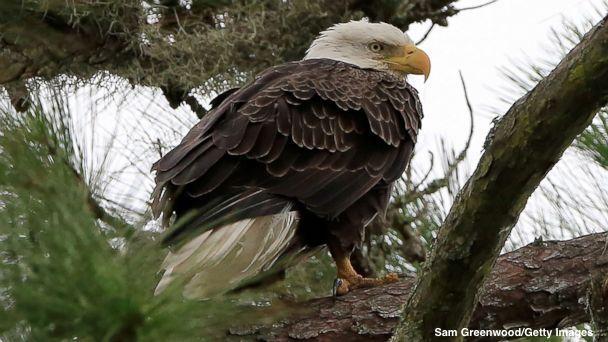 Good Morning America Eagles : Good morning america gma latest news breaking